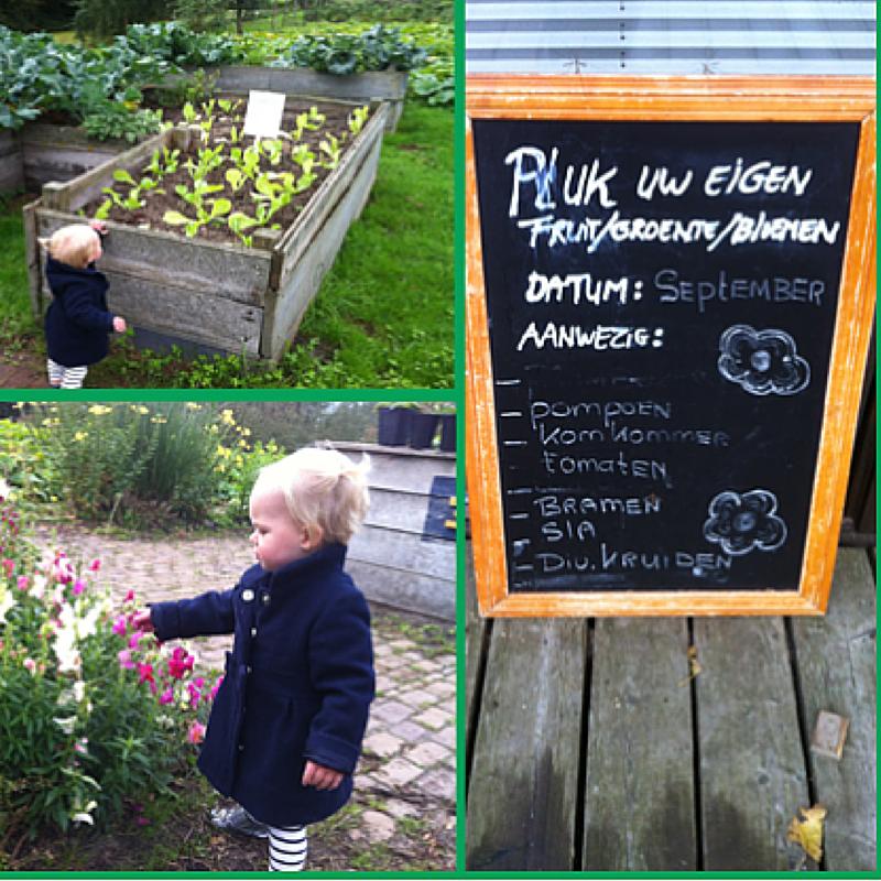 De Pluktuin – Zorgboerderij De Mikkelhorst