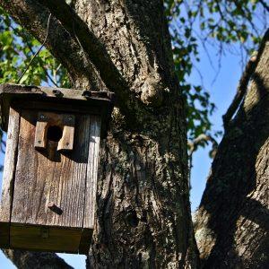 Mees krijgt ring   Het Groninger Landschap @ Lettelberterpetten in De Onlanden   Sauwerd   Groningen   Nederland